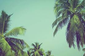 free palm tree images pictures and royalty free stock photos