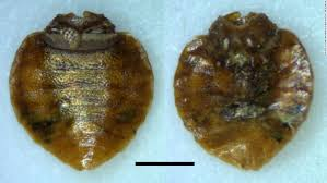 How Long Can Bed Bugs Live Without Air Bedbugs Have Favorite Colors Too Study Finds Cnn