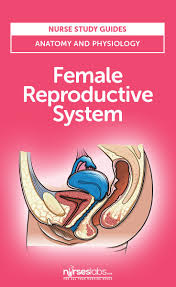 Anatomy Of Female Reproductive System The 25 Best Female Reproductive System Ideas On Pinterest