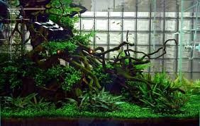 aquascaping layouts with stone and driftwood aquascaping designs ideas layouts