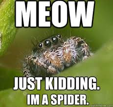 Shower Spider Meme - misunderstood spider meme bed