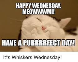 Happy Wednesday Meme - happy wednesday meowwwmi have a purrrrfect day it s whiskers
