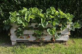 top 10 upcycled garden ideas upcycle that