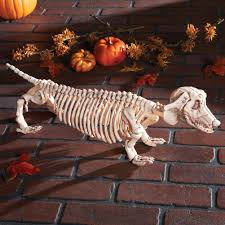 amazon com dachshund skeleton halloween decoration patio lawn