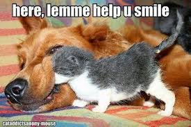 Smiling Cat Meme - 75 most funniest smile pictures