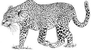 imagenes de animales carnivoros para imprimir animales para pintar carnivoros archivos imagenes de animales para