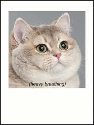 Cat Heavy Breathing Meme - heavy breathing cat art prints by godlymagikarp redbubble