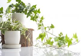 what are the different types of house plant fungus