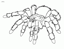 coloring page of a spider coloring home