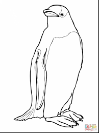 terrific gentoo penguin coloring page with penguins coloring pages