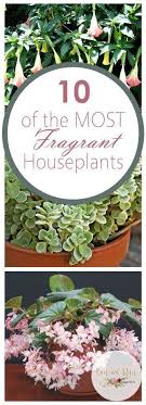 fragrant indoor plants 10 of the most fragrant houseplants houseplants house plant decor
