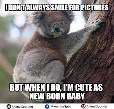 Angry Koala Meme - koala meme i love koala bears pinterest memes adorable