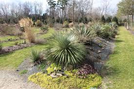 edge of the woods native plant nursery january 2017 newsletter u2013 peckerwood garden