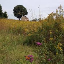 grassland native plants fight climate change at home landscaping with native grasses