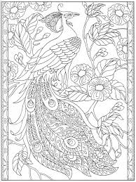 peacock coloring page 24 31 color pages stencils templates