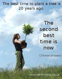 the best time to plant a tree coal country the
