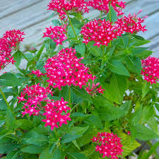 Long Blooming Annual Flowers - south central gardening favorite flowers for spring in tx and ok