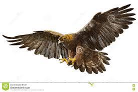 golden eagle landing vector stock vector image 75363067