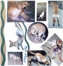 Dog Scrapbook Album Telling Your Pet U0027s Story Scrapbooks Strut Their Stuff