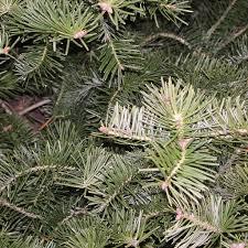 types of trees galehouse tree farm