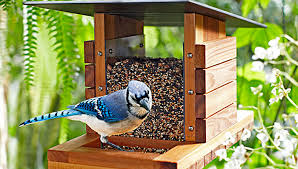 be a part of the great backyard bird count the apopka voice