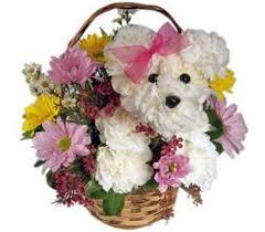 dog flower arrangement house of flowers oshkosh wisconsin
