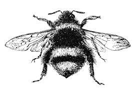 free stock image vintage bumblebee the graphics fairy