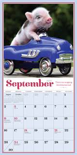 pocket pigs mini calendar 2018 amazon co uk richard austin