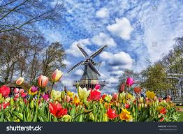 dutch windmill colorful tulips spring garden stock photo 546097630