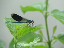 small dragonfly on green leaf domain free photos for