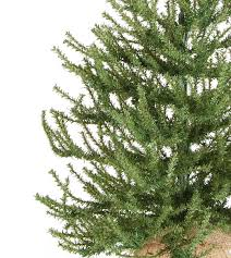 unlit pistol pine artificial trees treetime