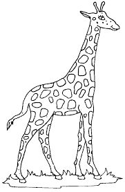 Giraffe Coloring Pages Coloring Giraffe Picture by Giraffe Coloring Pages