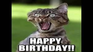 Grumpy Cat Meme Happy Birthday - happy birthday grumpy cat meme generator passionx
