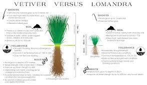australian native plants for clay soil veticon 5 ways vetiver grass technology can assist in native