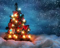 christmas tree outside wallpapers christmas tree outside stock