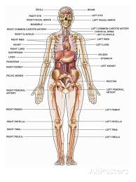 Female Anatomy Image Human Body Diagram Organs Female Human Anatomy Diagram