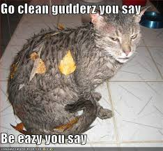 Wet Cat Meme - 20 most funny wet photos and images