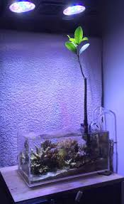 Fluval Sea Marine And Reef Led Strip Lights by 24 Best Nano Aquarium Images On Pinterest Nano Aquarium Marine