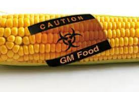Genetically Modified Food What Are Gmos Part 2 Just The Truth