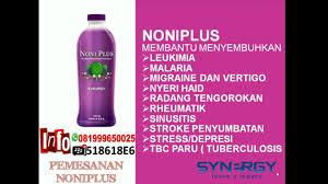 Teh Noni khasiat manfaat dan harga noni plus synergy worldwide