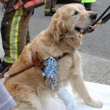 Dogs Helping Blind People 70 Best Pets Helping People Images On Pinterest Helping People