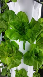 Hydroponics Vegetable Gardening by 59 Best Tower Garden Images On Pinterest Tower Garden Towers