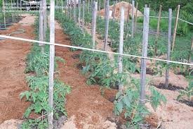 beginner gardening is sawdust good for a vegetable garden 1 by