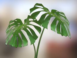 House Plants by 3 Ways To Choose Low U2010maintenance Houseplants Wikihow
