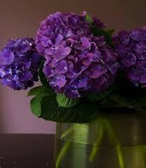 Purple Hydrangea Purple Hydrangeas Pretty Flowers Pinterest Purple Hydrangeas