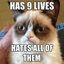 Original Grumpy Cat Meme - grumpy cat sayings the original photo of grumpy cat went viral