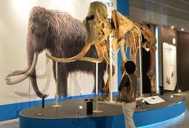 u0027t clone dinosaurs clone mammoths