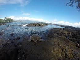 best hilo location richardsons park swimming snorkeling