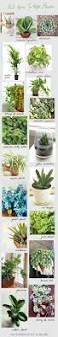 Beautiful House Plants by 11 Easy To Grow Houseplants Houseplants Cast Iron And Palm
