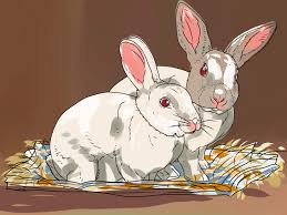 how to keep your house clean all the time care for an outdoor rabbit pet rabbit rabbit and pet care